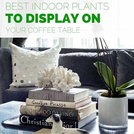 Best indoor plants to display on your coffee table - Zespoke